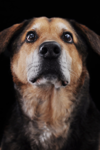 stockvault-portrait-of-a-dog130966